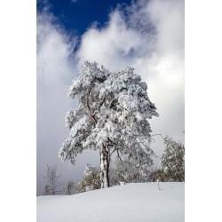 Arbol con nieve