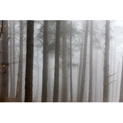 Bosque con niebla