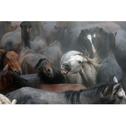 Caballos de Sabucedo